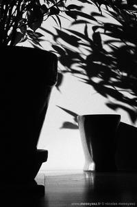 L'ombre de Lucy