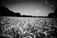 Pause au blé complet