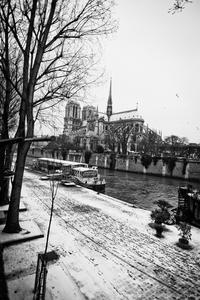 Notre Dame des Cloches Surgelées
