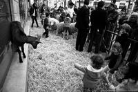 La petite ferme de Paris
