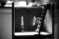 Le Donjon du Chat Noir