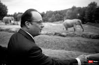 François et les Eléphants