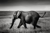 Run Dumbo Run