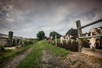 Le Chemin des Vaches